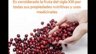 Arándanos: usos medicinales y propiedades del arándano