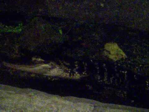 9ecd692e4aea3 Mall of America - Crocs - YouTube