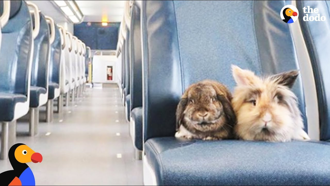Bunnies Have The Best Lives And Go On Amazing Adventures - SUMBA & BURNY