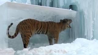অদ্ভুতভাবে হিমায়িত হয়ে যাওয়া প্রাণীরা !! Amazing Frozen Animals Found In Ice
