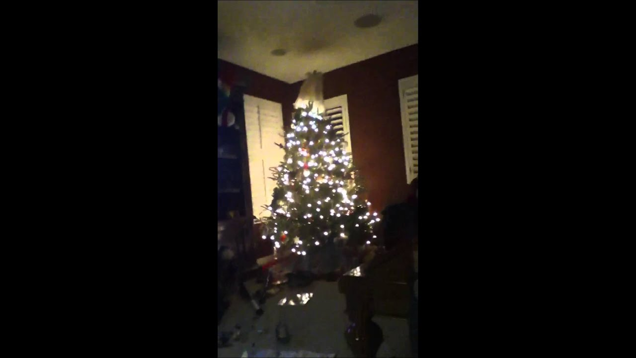 We love publix Christmas trees - YouTube