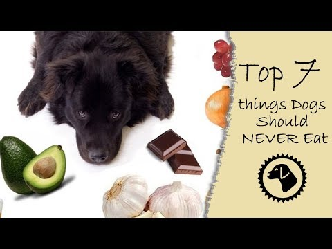Top 7 things Dogs Should NEVER Eat