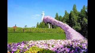 Скульптуры из растений, цветов.