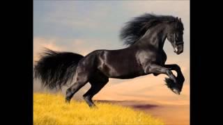 WILD HORSE ROD STWEART