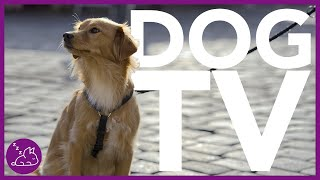 Dog TV: Forest Virtual Dog Walk  Entertaining Video for Dogs (NEW)