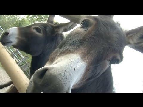 Funny nice animals - Farm family fun - die Stars vom Bauernhof sind da