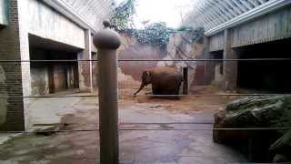 Nach dem Baden, Peeling für die Elefantenhaut