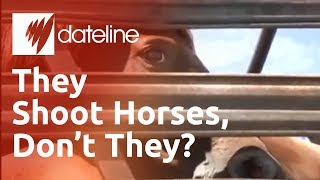 Americas unwanted horses being purchased for slaughter