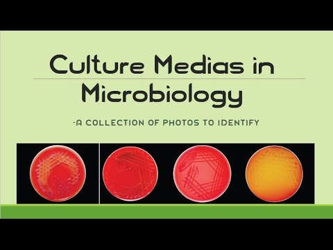 Culture Media in Microbiology