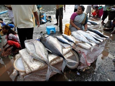 FISH EXPORT BUSINESS  9029093494 #Pomfret #fishexport #fishbusiness