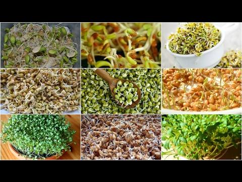 Семена ржи озимой купить в Украине, Посевная рожь озимая