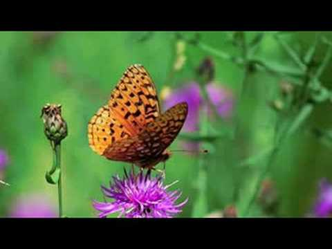 Soothing music/flowers/butterflies