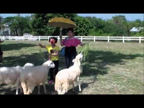 ฟาร์มแกะ ชะอำ เพชรบุรี by homelandchonburi