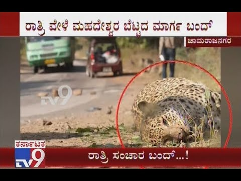 Night traffic Ban at MM Hills, Cauvery Wildlife Sanctuaries To Avoid Animal Deaths Due To Accidents