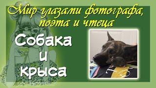 Красивые авторские стихи и фото Дружба собаки и крысы