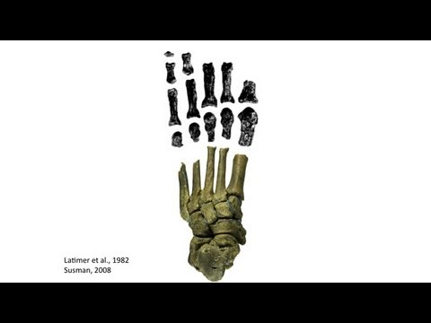 CARTA: Bipedalism and Human Origins--Jeremy DeSilva:Foot and Ankle Diversity in Australopithecus