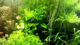 Мягкая вода для аквариума. Осмосированая вода для аквариума.