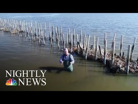 Christmas trees come to the rescue in Coastal Louisiana   NBC Nightly News