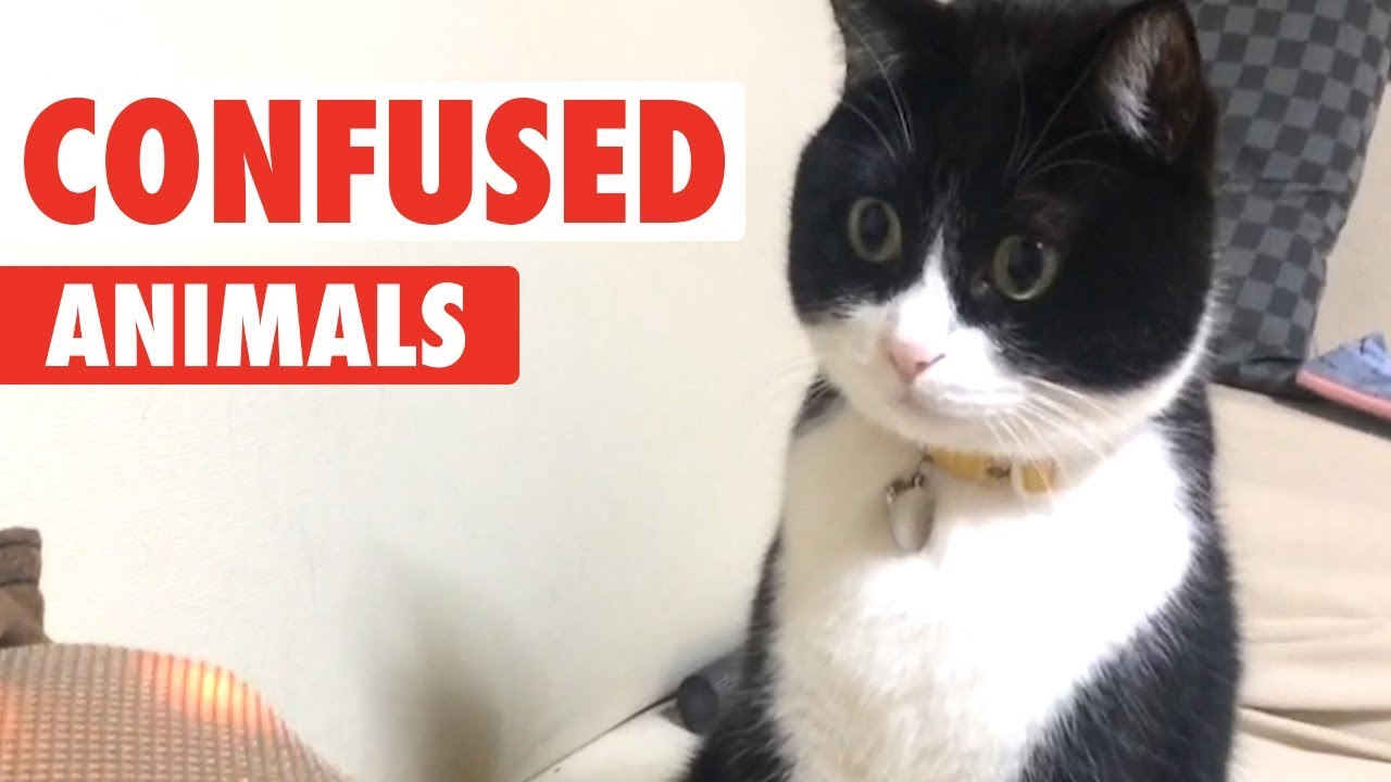 Confused Animals | Funny Pet Video Compilation