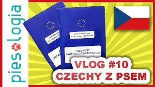 Vlog #10 Czechy z psem - paszporty dla psów, pakowanie, podróż, Broumov