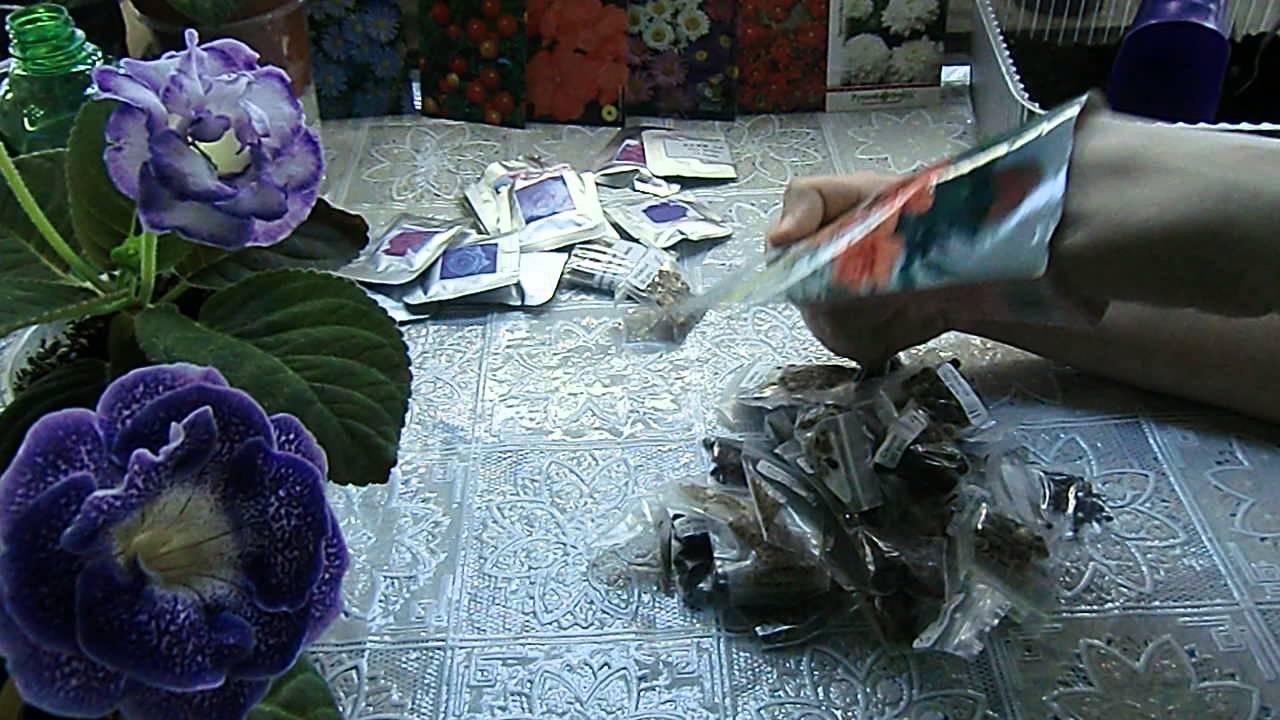 Как правильно посеять виолу чтобы получить цветение в первый год .