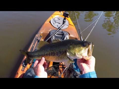 Prespawn Bass Fishing At Live Oak Plantation | Field Trips Georgia