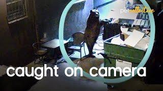 Animals Caught On Camera