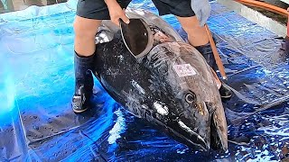 $10000/ 650 lb Giant Bluefin Tuna cutting for Sashimi - Bluefin Tuna cutting skill