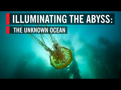 Illuminating the Abyss: The Unknown Ocean