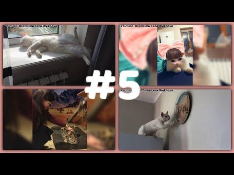 Deaf - Funny cats compilation #5 (Сборник забавных кошек)