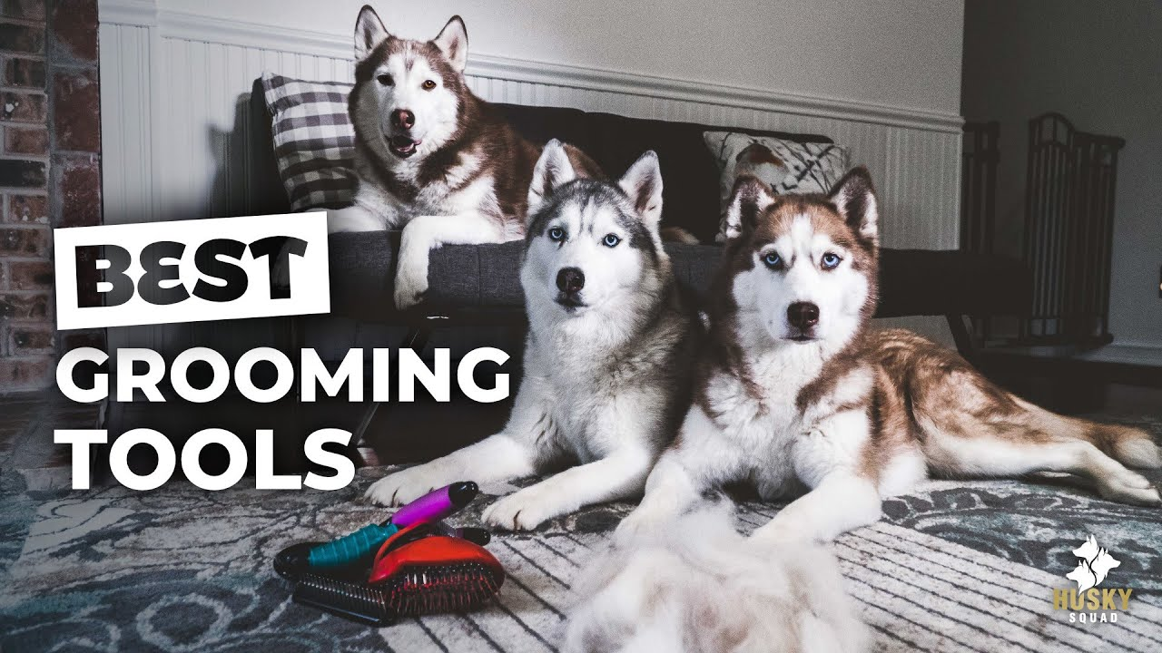 Must Have Grooming Tools For Huskies Youtube
