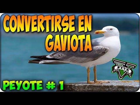 3635483167 GTA 5 - Como convertirse en GAVIOTA ! Localización De Peyote #1 PS4 y XBOX  ONE - YouTube