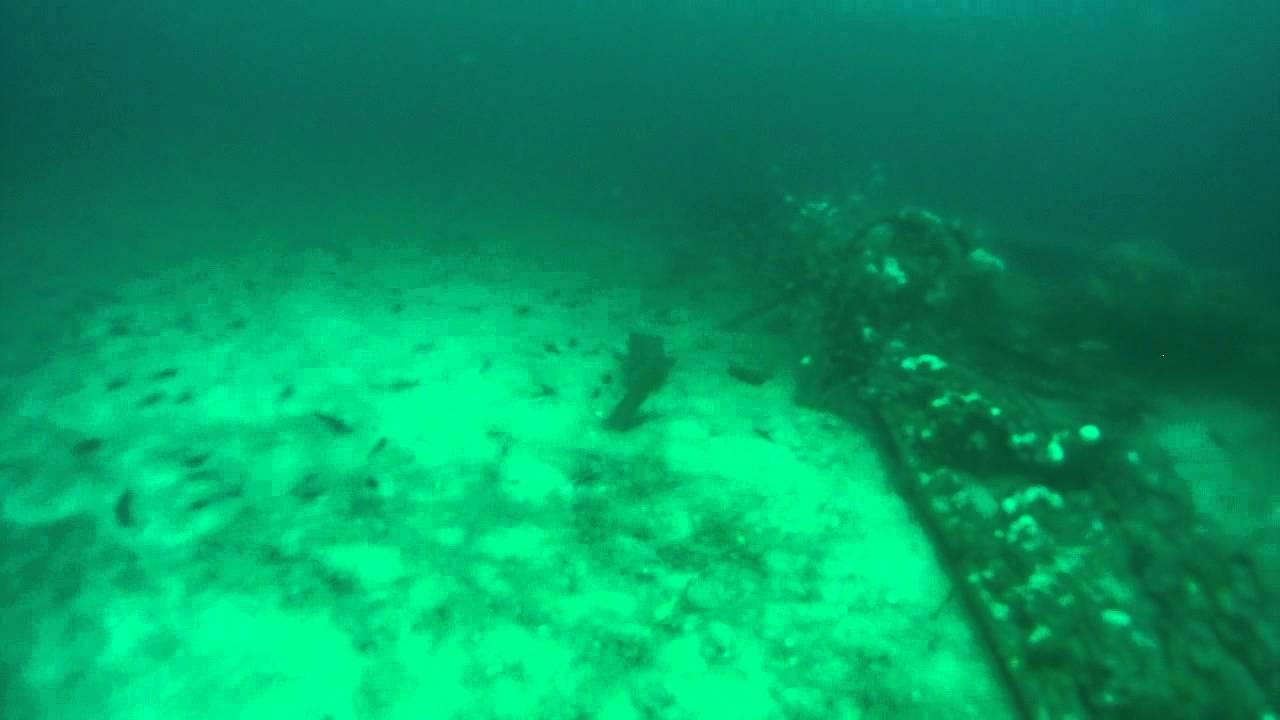 Sea B Galore Va Beach Dive