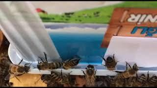 Arı Ustası Sıfırdan Kolay Arıcılık Kursu 9 Peynir Kutusundan Şerbetlik Kontrolü