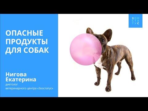 Опасные для собак продукты