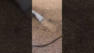 Carpet cleaning sample - TNT Carpet and Upholstery Cleaning