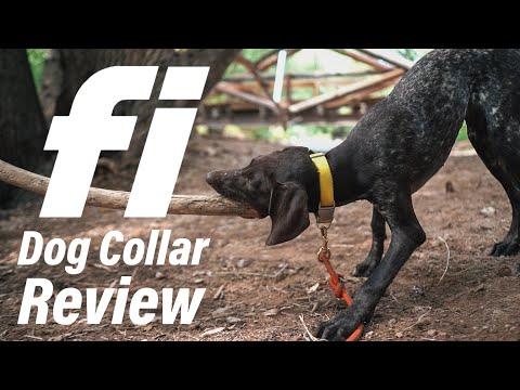 Fi Dog Collar Review | Why I Chose A GPS Dog Collar