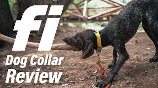 Fi Dog Collar Review | Why I C…