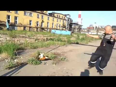 омск приколы видео