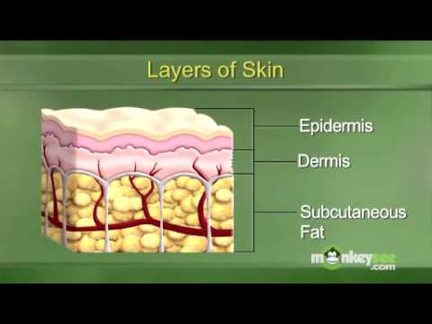 Understanding the Layers of the Skin - YouTube