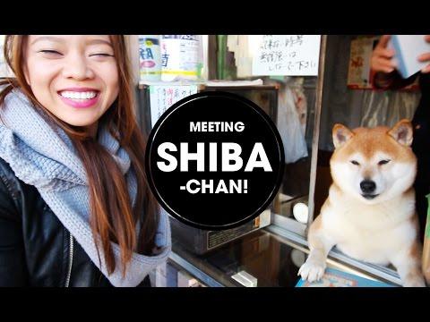 Shiba Inu selling cigarettes!