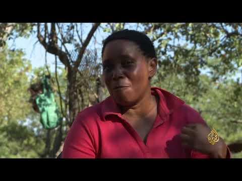 هذا الصباح- موت غامض لأشجار الباوباب الأفريقية المعمرة  - نشر قبل 3 ساعة