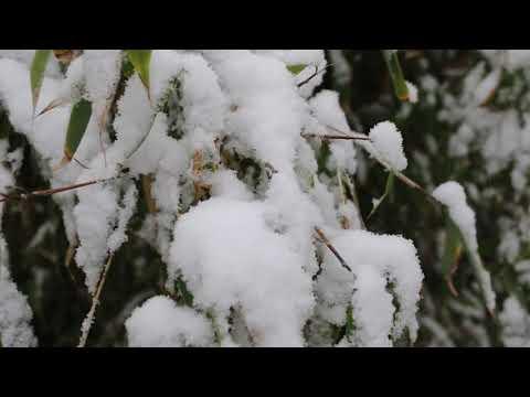 Sneeuw 16 januari 202