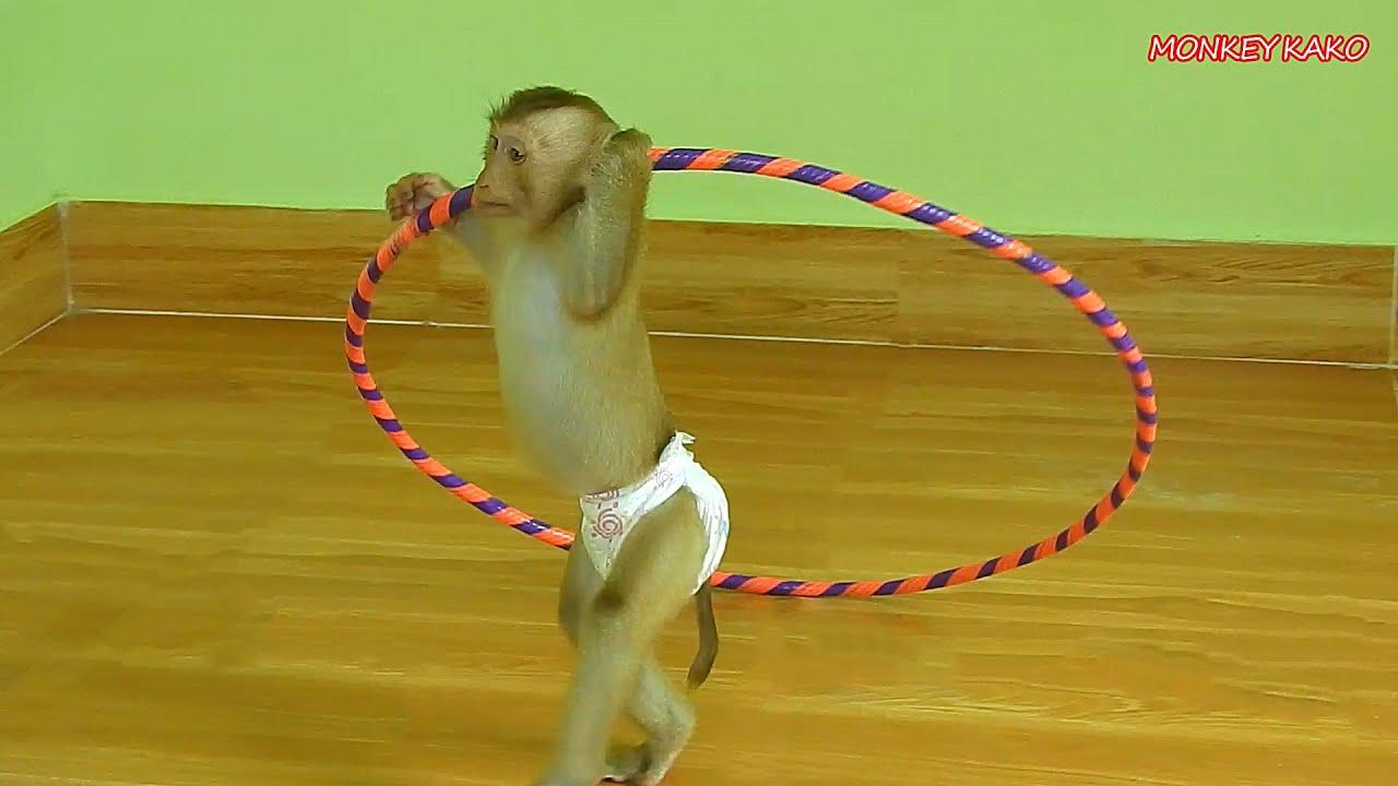 Adorable Monkey Kako Stand And Walking Play Kid Hula Hoop Very Funny
