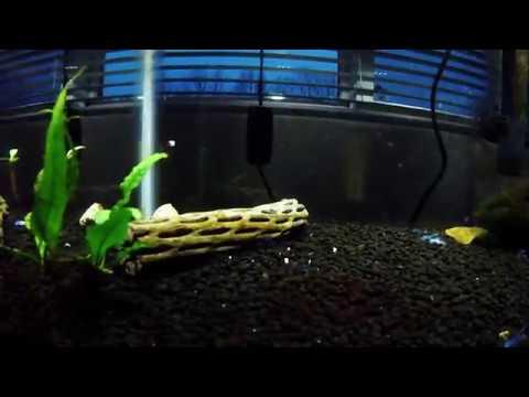 Secondary Tank Setup: My Blue Dwarf Crayfish