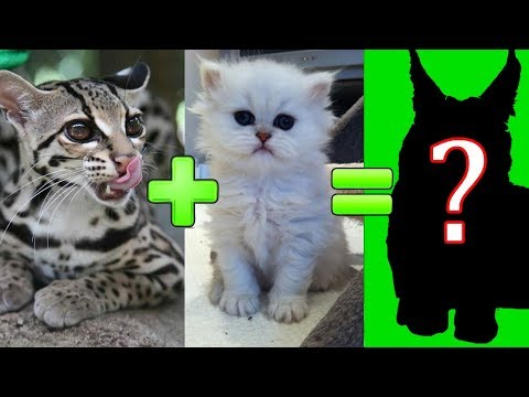 15 UNBELIEVABLE CUTE CROSS BREED CATS