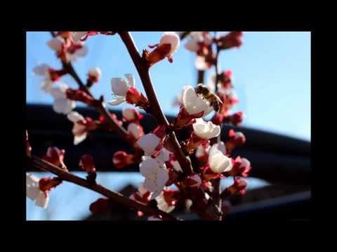 Картинки весна. Красивые моменты весны
