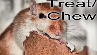How To Make A Gerbil Treat/Chew Toy!