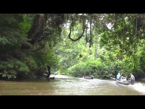Taman Negara National Park, Malaysia - Day 1