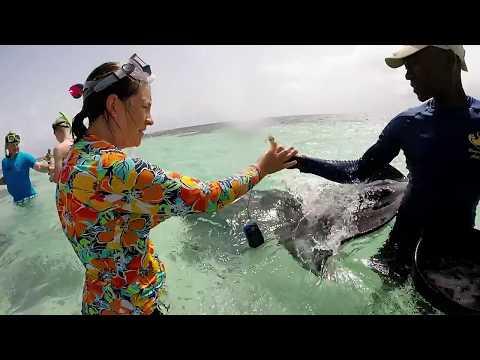 St. John's, Antigua - Stingray Swim and Snorkel 7/18/17